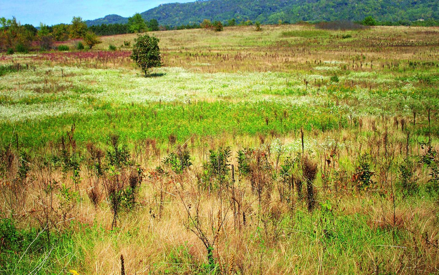new amsterdam grasslands mississippi valley conservancy