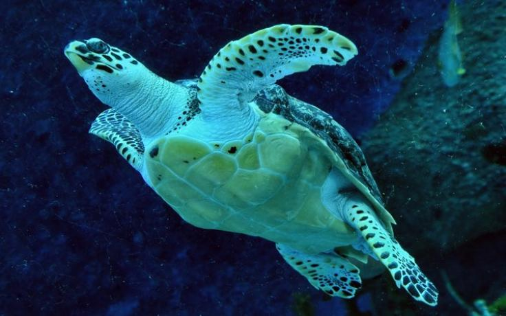 sea turtle image from original publication