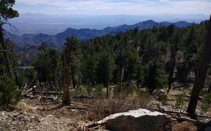 photo of Mt. Lemmon near Tucson, AZ