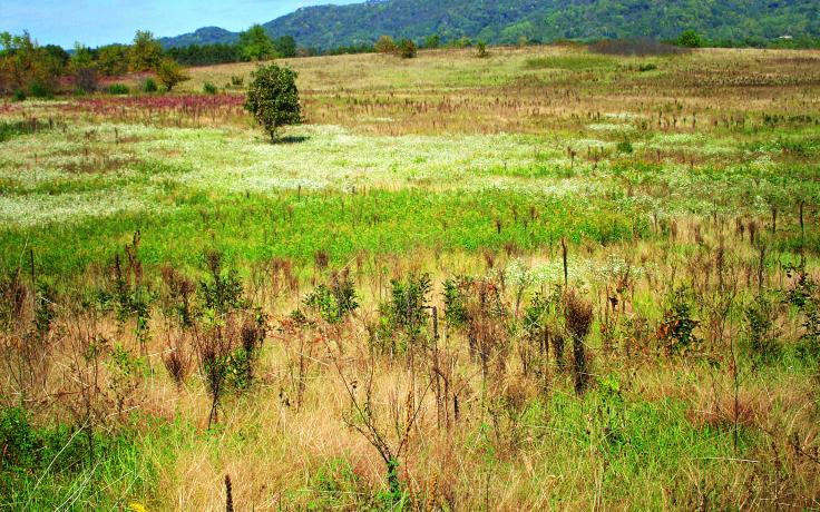New Amsterdam Grasslands